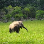 Maiden safari experience with Yala Safari Camp